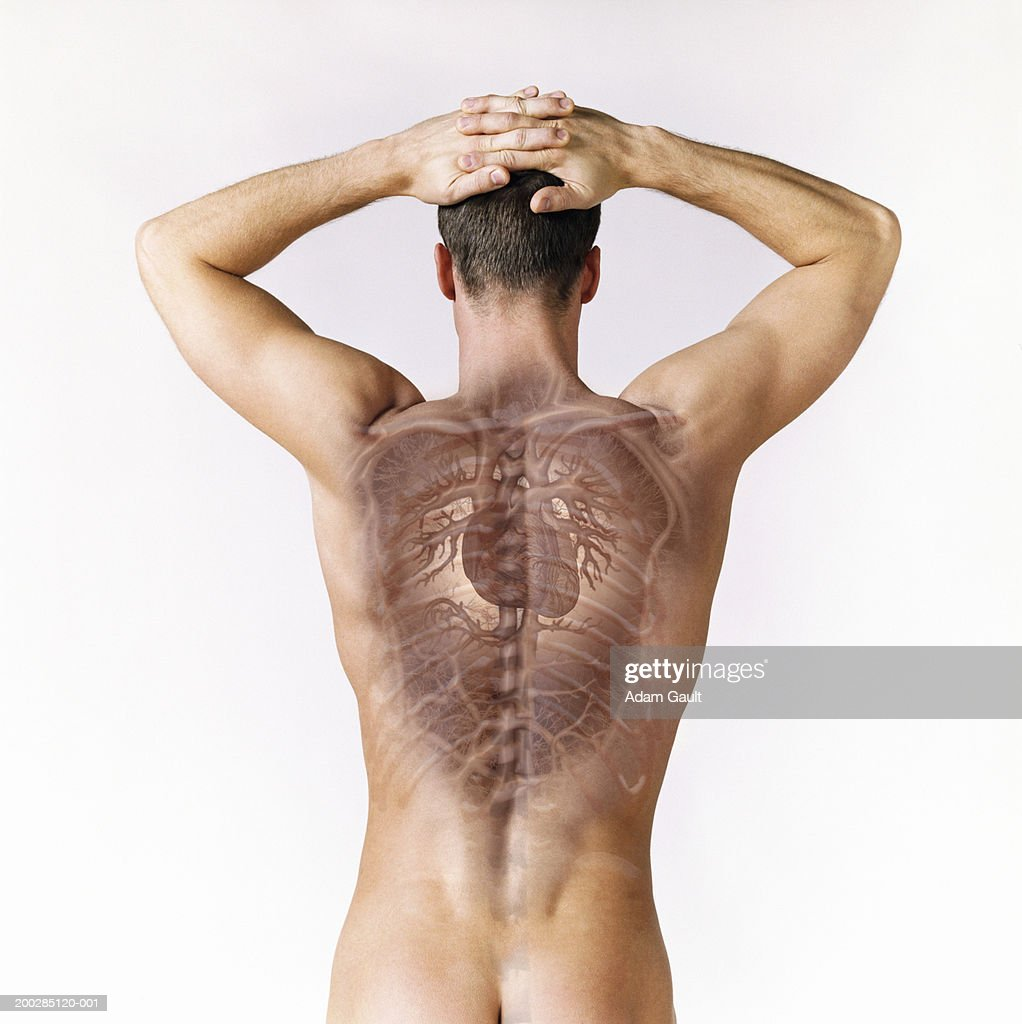 Man with hands on head, internal organs visible (Digital Composite) : Stock Photo