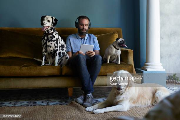 man with headphones looking at tablet, surrounded by his 3 dogs - solo 2018 film stock pictures, royalty-free photos & images