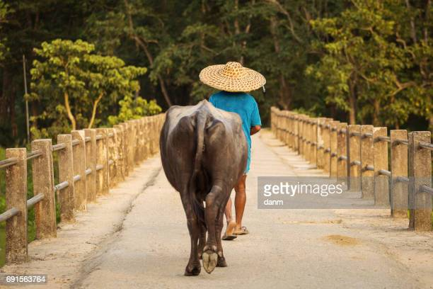 Man with his buffalo walking on a bridge in countryside of Nepal, Chitwan Park.