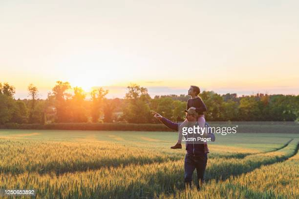 man with his daughter on his shoulder walk through field at sunset - summer stock pictures, royalty-free photos & images