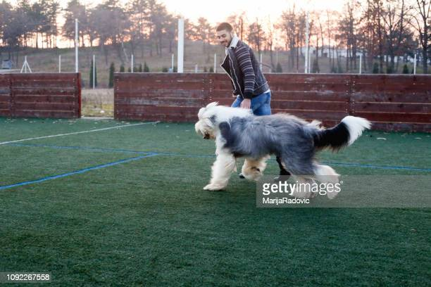 man with his dog playing in the park - old english sheepdog stock pictures, royalty-free photos & images