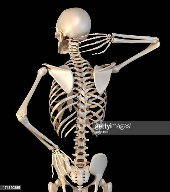 Lower Back Skeleton Stock Photos and Pictures | Getty Images
