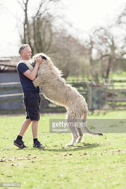 man with his irish wolfhound on a meadow - irischer wolfshund stock-fotos und bilder