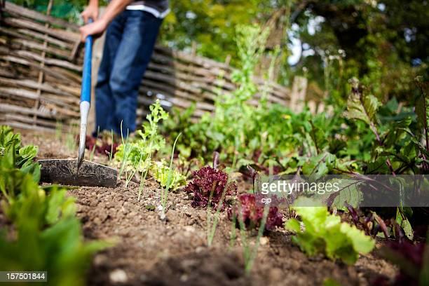 男性、しばし待たなければ、植物園 - 耕す ストックフォトと画像