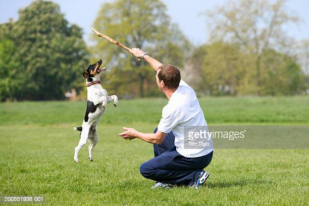 Man with Jack Russell Terrier in park, dog jumping to catch stick