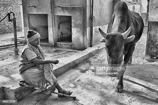 CONTENT] Man with leprosy seated as cow passes by him in the monkey temple in VARANASI INDIA