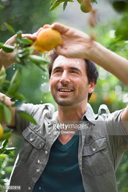 homem com laranja - orange farm - fotografias e filmes do acervo