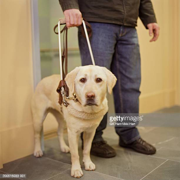 Man with seeing eye dog in hallway, low section