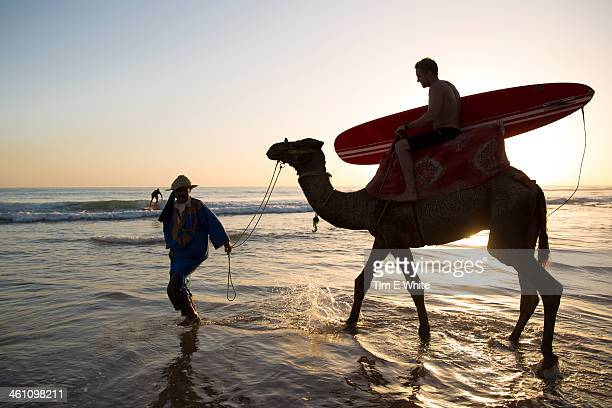 man with surfboard on a camel in shallow water, ta - agadir photos et images de collection