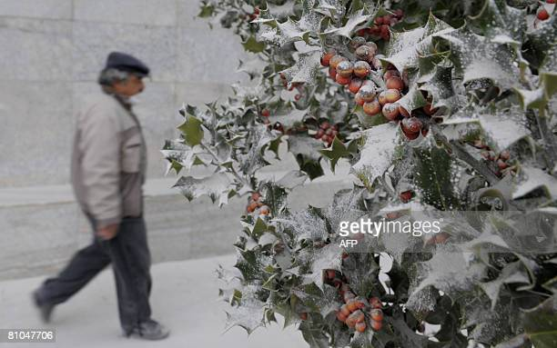 A man with surgical mask walks next to a mistleto plant covered with ash from Chile's Chaiten volcano in the Argentine city of Esquel on May 10 2008...