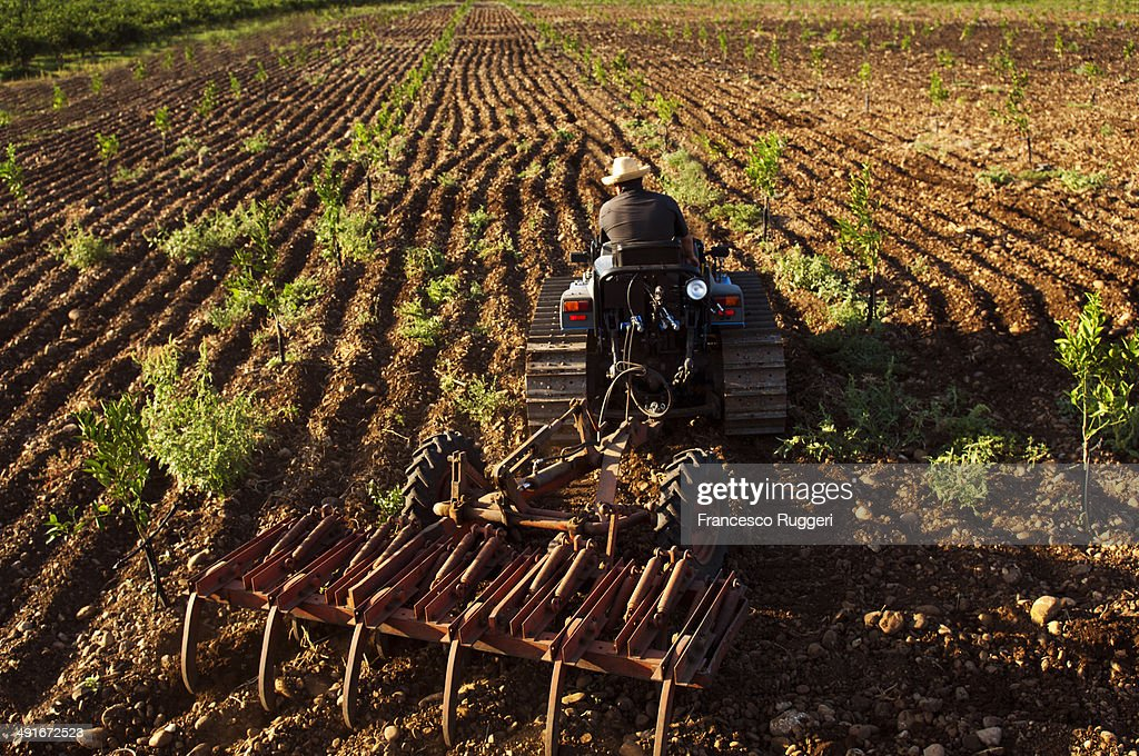 Man with tractor plowing a young orange grove : Stock Photo