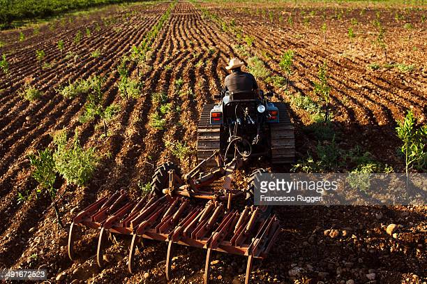man with tractor plowing a young orange grove - orange orchard stock photos and pictures