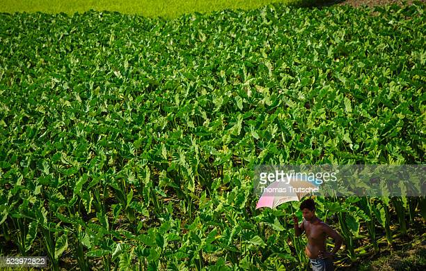 A man with umbrella stands next to a vegetable field on April 10 2016 in Betal Para Bangladesh