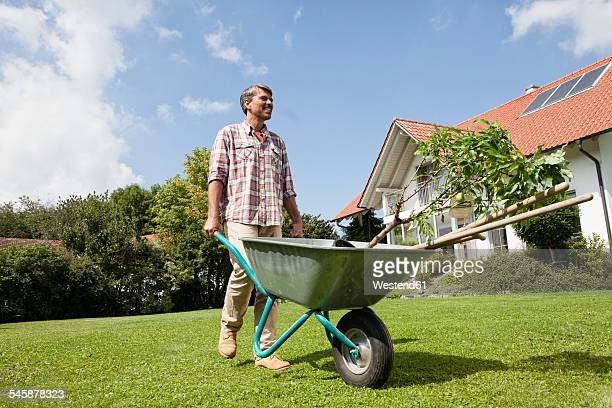 man with wheelbarrow in garden - wheelbarrow stock photos and pictures