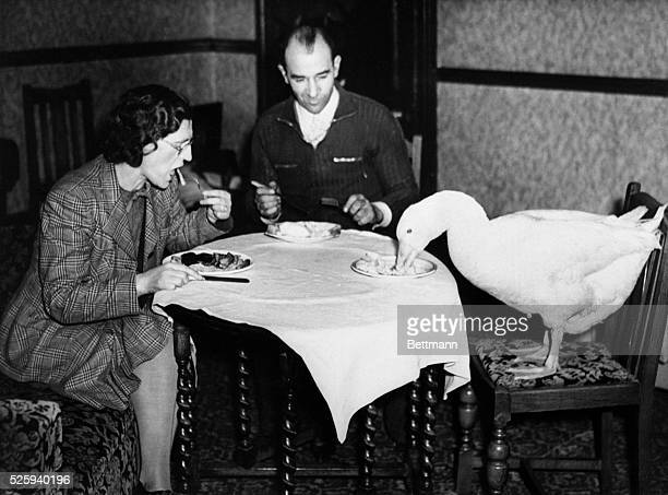 Man woman and goose at round table