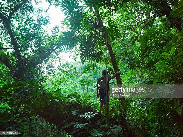 man wondering the forest - las posas stock pictures, royalty-free photos & images