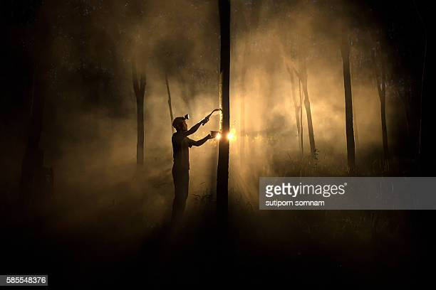 Man worker People working cutting Tapped rubber tree