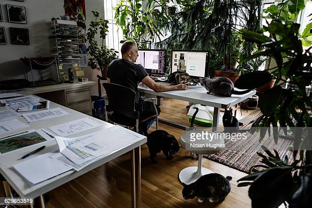 man working at desk surrounded by cats - small group of animals stock pictures, royalty-free photos & images
