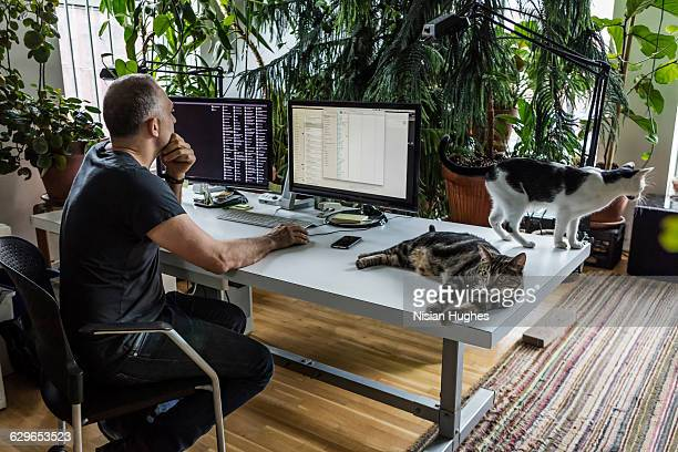 Man working at desk surrounded by cats