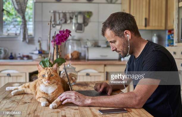 man working from home, sitting at kitchen table with cat, using laptop - 35 39 anos imagens e fotografias de stock