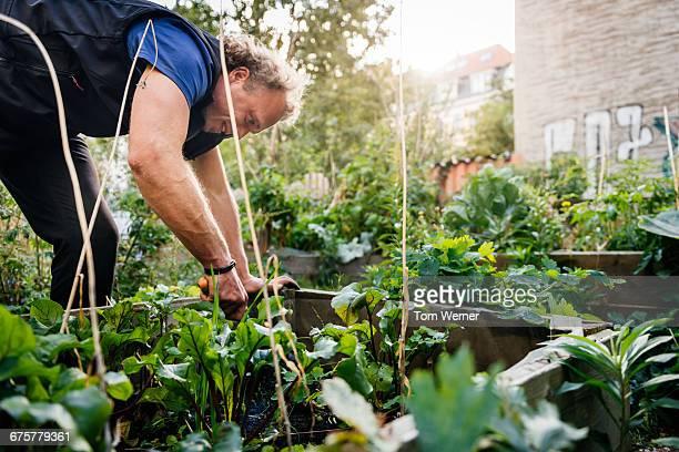 Man working in a community garden