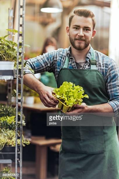 man werken in een kas, neiging en dienbladen van zaailingen sorteren