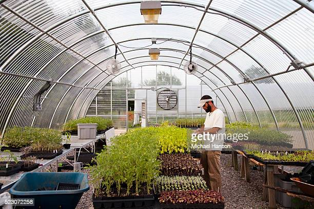 Man working in greenhouse, Birmingham, Alabama, USA