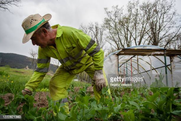 Man working in his owned orchard after government authorised work in private orchards on May 04, 2020 in El Espinar, Segovia, Spain. Spain is...