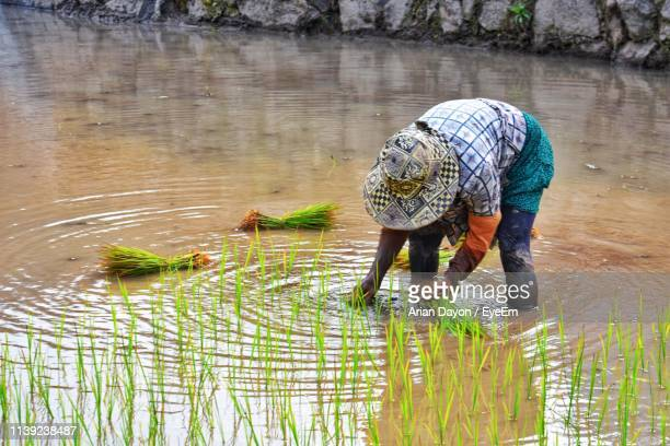 man working in lake - filipino farmer stock photos and pictures