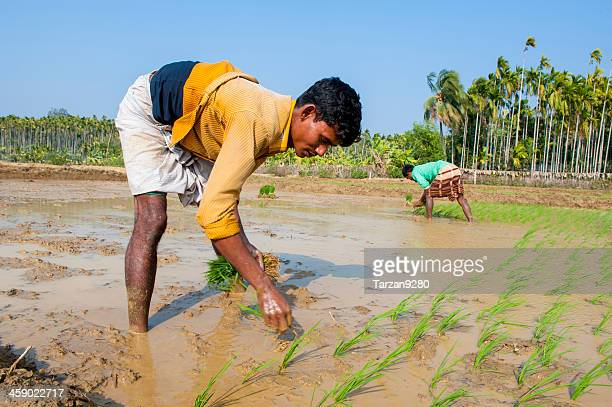 Man working in paddy field