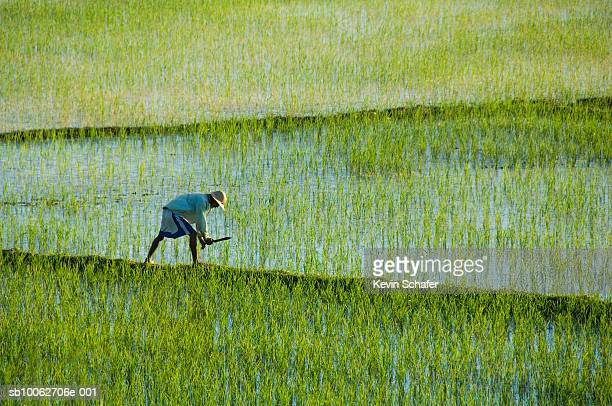 man working in rice paddies - east africa stock pictures, royalty-free photos & images