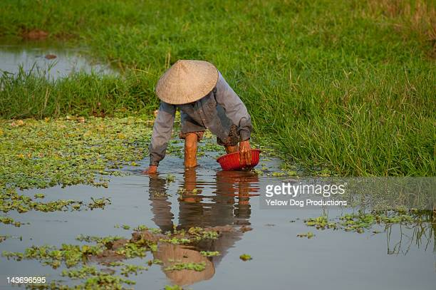 man working in rice paddy, Vietnam