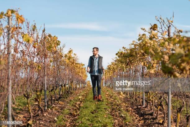 man working on a small vineyard in sweden - al centro foto e immagini stock