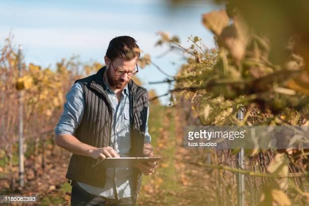 man working on a small vineyard with his tablet - cena não urbana imagens e fotografias de stock