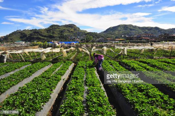 man working on agricultural field against sky - filipino farmer stock photos and pictures