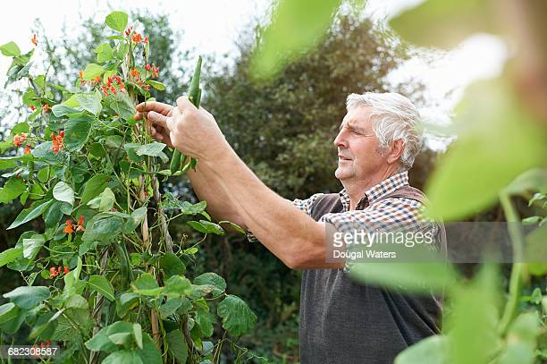 Man working on allotment.