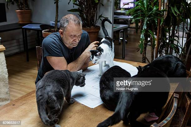 man working on building plans surrounded by cats - small group of animals stock pictures, royalty-free photos & images