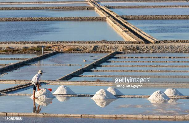 man working on salt field - karl lagerfield bildbanksfoton och bilder