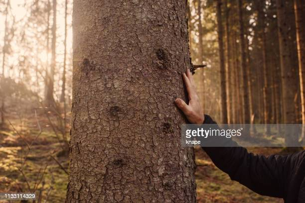 man worried of the nature and forest enviromental - bark stock pictures, royalty-free photos & images