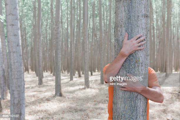 man wrapping his arms around and hugging a poplar tree on a commercial tree farm. - solo un uomo foto e immagini stock