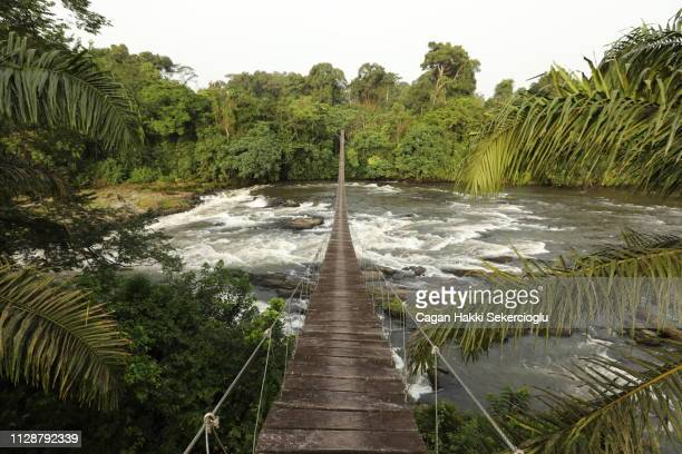 mana river foot bridge, entrance to the korup national park - größere sehenswürdigkeit stock-fotos und bilder