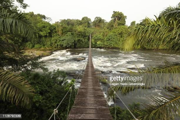 mana river foot bridge, entrance to the korup national park - cameroun photos et images de collection