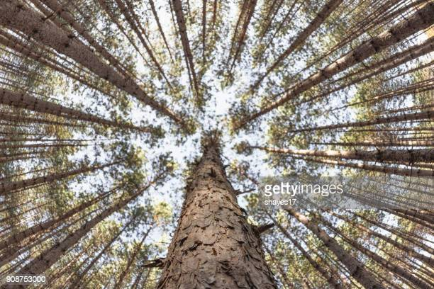 managed forest perspective - unusual angle stock pictures, royalty-free photos & images