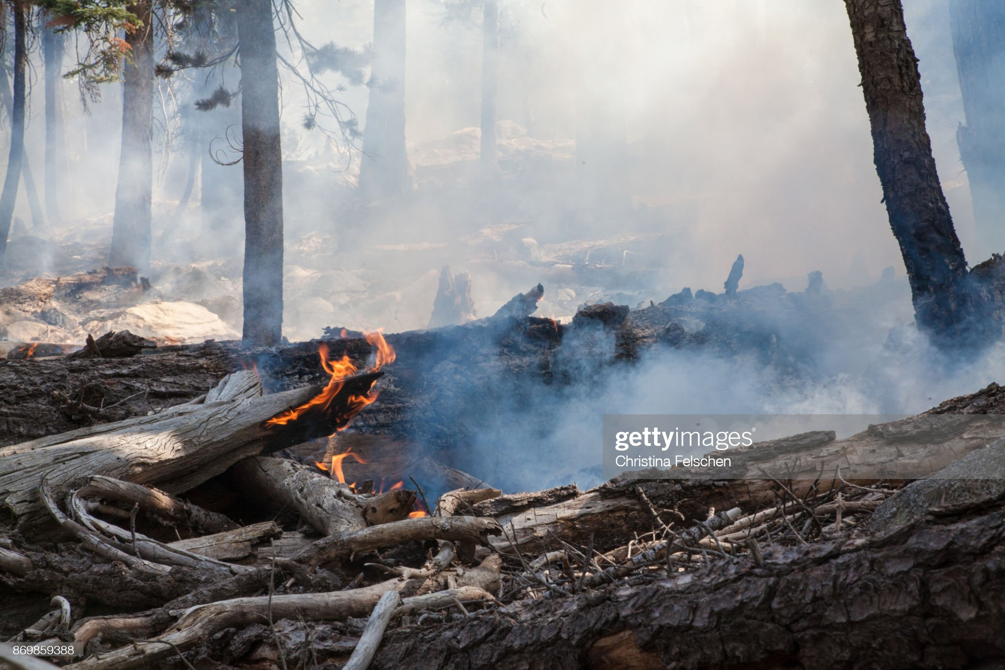 Management fire in Yosemite National Park : Stock Photo