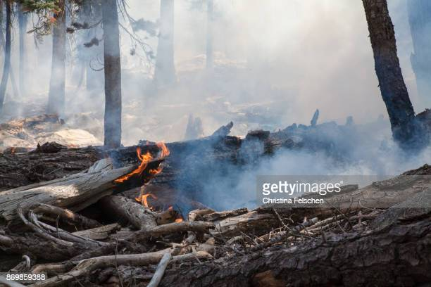 management fire in yosemite national park - wildfire stock photos and pictures