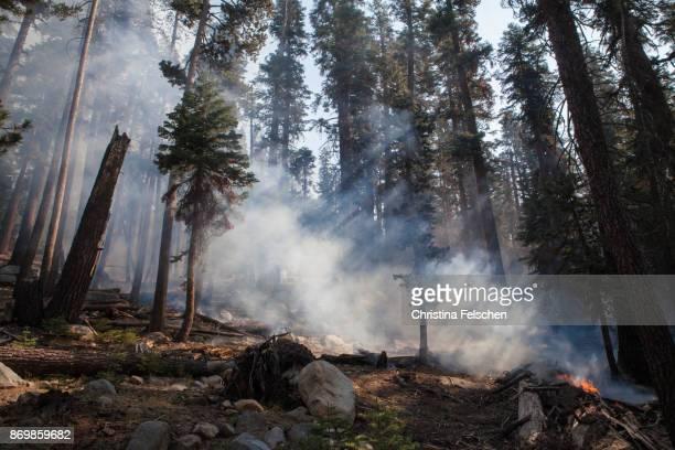 management fire in yosemite national park - christina felschen - fotografias e filmes do acervo