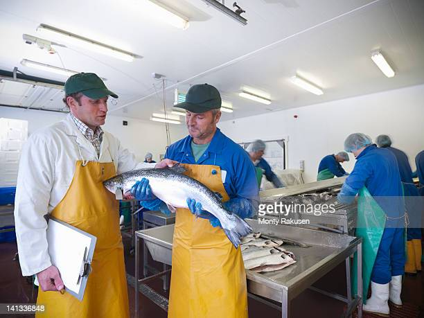 manager and staff discuss production line of hand-reared scottish salmon farm - solo adulti foto e immagini stock