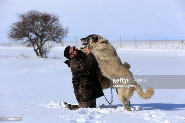 Manager of Central Anatolia Kangal Dogs Training and Production Center of Sivas provincial special administration and Kangal Dogs expert Huseyin...