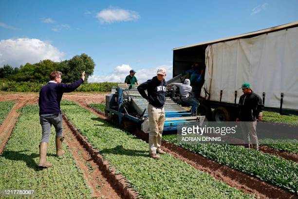 Managing Director Tom Amery talks with the UK Seasonal Relief Team working for The Watercress Company harvesting spinach on farmland near Dorchester...