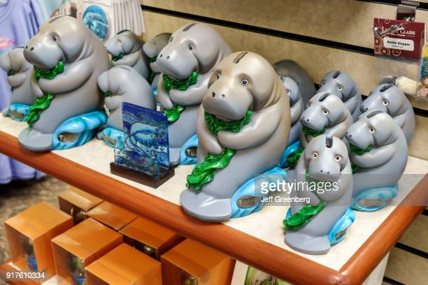 Manatee coin banks for sale in the gift shore at South Florida Museum